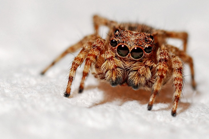 spider-564571